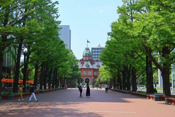 北海道庁旧本庁舎前 銀杏並木