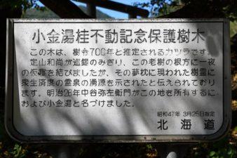 小金湯桂不動記念保存樹木 説明板