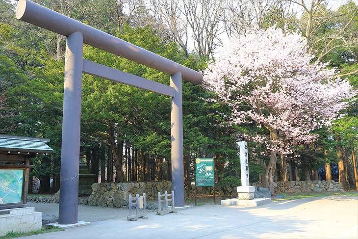 北海道神宮 第3鳥居と桜