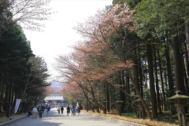 北海道神宮 参道