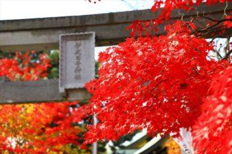 弥彦神社 鳥居と紅葉