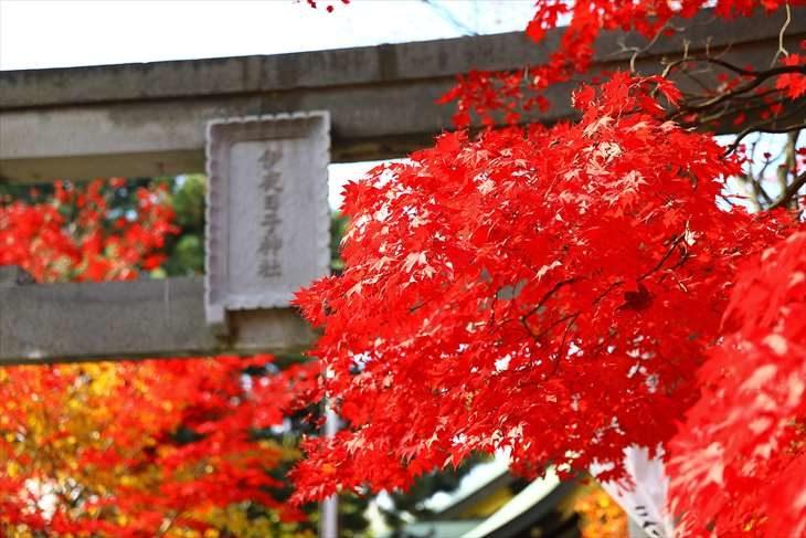 弥彦神社 紅葉