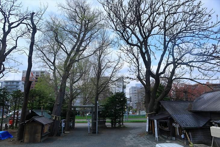 札幌諏訪神社 境内の様子と御神木