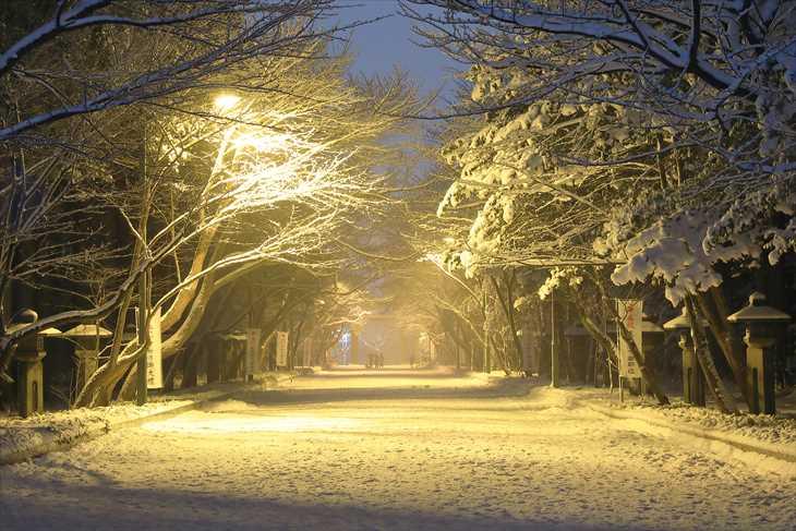 冬の夜の北海道神宮