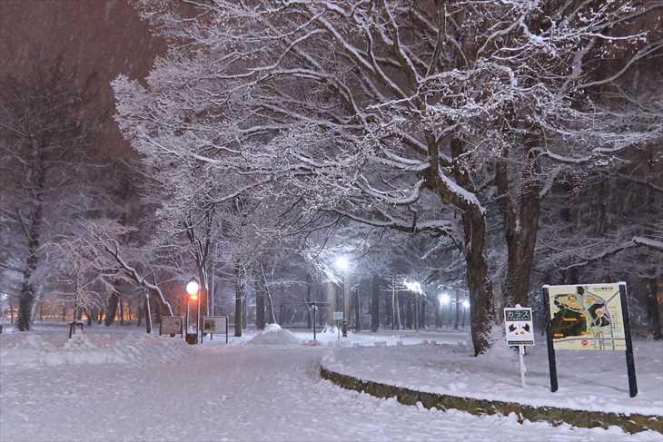 冬の夜の円山公園