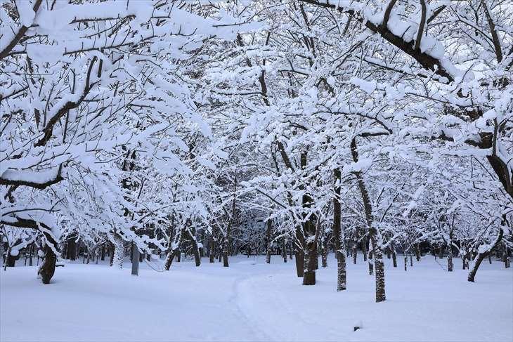 北海道神宮の冬の景色